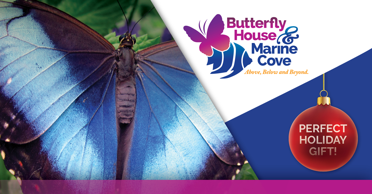 Butterfly House & Marine Cove Perfect Holiday Gift ad