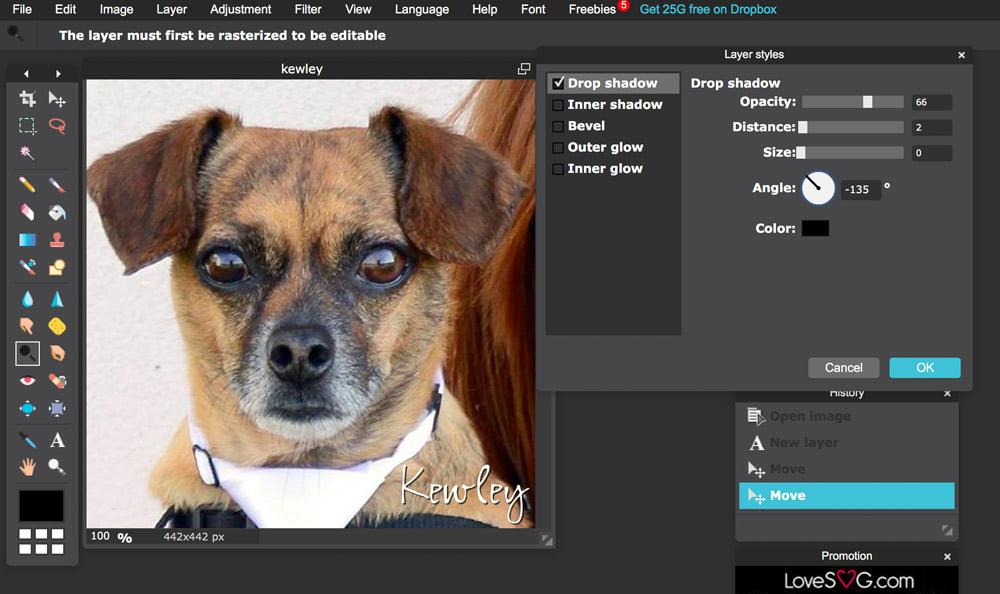 pixlr editing photo of dog